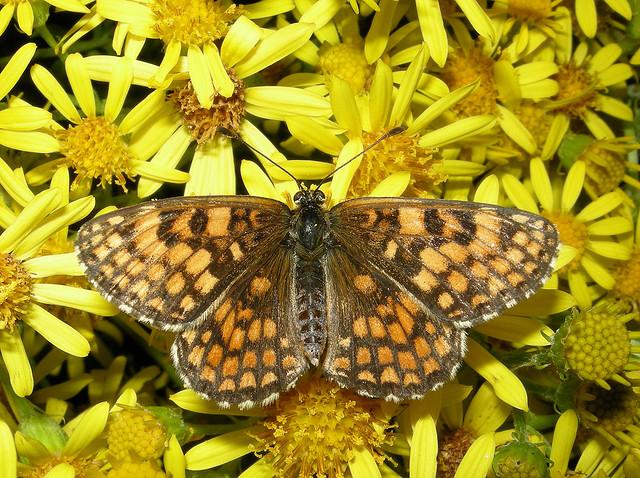 Butterfly botnet malware